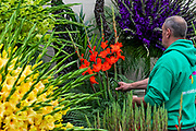 Pheasant Plants in the Grand Pavillion - Press preview day at The RHS Chelsea Flower Show.