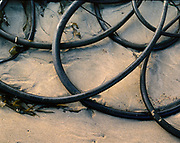 Bull Kelp,Phillip Burton Wilderness, Point Reyes National Seashore, California