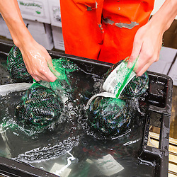 Two pound bags of processed mussles at Moosabec Mussels, Inc., in Jonesport, Maine.