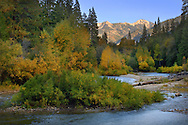 Fall foliage along the South Fork of the Kings River, Kings Canyon National Park, California