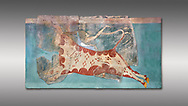 Mycenaean Fresco wall painting of a Mycanaean acrobat leaping over a bull, Early Palace,  Tiryns, Greece.  Athens Archaeological Museum. Grey Background<br /> <br /> 14th  Cent BC.. Cat No 1595. The Mycenaean Fresco depicts an acrobat leaping over a charging bull whilst holding onto its horns. This ritual symbolised the struggle of domination of man over wild nature. .<br /> <br /> If you prefer to buy from our ALAMY PHOTO LIBRARY  Collection visit : https://www.alamy.com/portfolio/paul-williams-funkystock/mycenaean-art-artefacts.html . Type -   Athens    - into the LOWER SEARCH WITHIN GALLERY box. Refine search by adding background colour, place, museum etc<br /> <br /> Visit our MYCENAEN ART PHOTO COLLECTIONS for more photos to download  as wall art prints https://funkystock.photoshelter.com/gallery-collection/Pictures-Images-of-Ancient-Mycenaean-Art-Artefacts-Archaeology-Sites/C0000xRC5WLQcbhQ