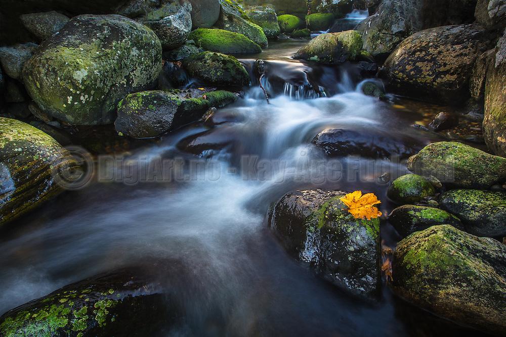 Lonely leaf in river   Ensomt løv i elv