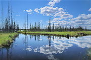 Cumulus clouds reflected in wetland<br /> Yellowknife Highway<br /> Northwest Territories<br /> Canada