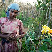 Bayush in the small garden beside her house after returning from farming in village of Amba Sebat...Bayush Kassan (age 37) lives in the village of Amba Sebat, 20km from the town of Assosa with her daughter Genet (age 14) and son Destaw (age 11) in a small thatched hut without running water or electricity. Bayush is part of a cooperative of 31 women who collectively own land on which they farm vegetables. She grows sesame and other oil-seeds and her village cooperative is part of the Assosa Farmers Multipurpose Cooperative Union. The Union buy's Bayush's seed for almost double the average price paid to her by private traders. ..Growing oil seeds presents challenges for the famers of Assosa in western Ethiopia. Many of the most vulnerable are forced to sell to when they cannot be guaranteed a good price for their product. Farms are often located in isolated areas which entails huge amounts of time and effort simply getting seeds to market. Many farmers do not have the resources to properly invest in their land and are tied into exploitative loan arrangements with brokers that deny them the chance to take proper control of their farms. And, as with other agricultural products, it is those agents that process the seeds into oil that secure the greatest profit, very little of which trickles down to benefit the farmer...In response to these pressures, twenty farming cooperatives have formed the Assosa Farmers Multipurpose Cooperative Union. By working together, individual farmers are able to pool their resources and squeeze out exploitative agents and brokers. The Union has sufficient capital that it can afford to wait for prices to reach a level at which it is profitable to sell seeds to market. The Union provides loans to constituent members together with training and advice to help farmers make better use of their land. And by collectively hiring vehicles through the Union, farmers need not spend so much time ferrying their produce to market. ..All these measures benef