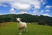 Black Sheep Farmed Animal Sanctuary