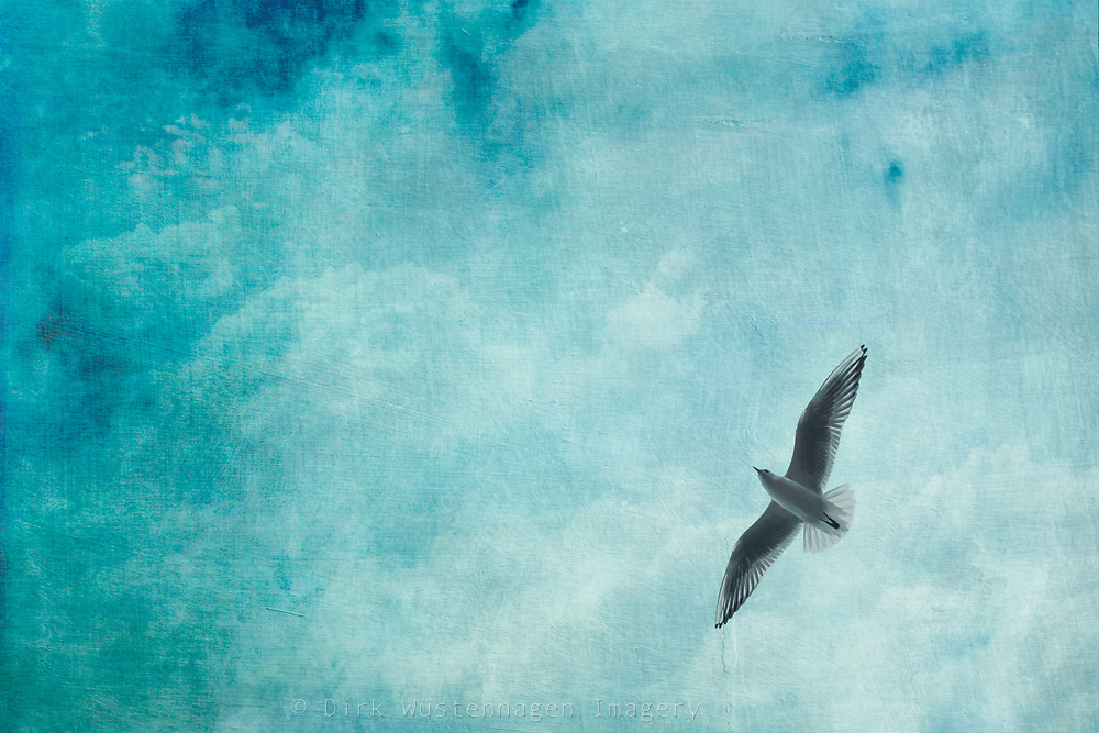 Low angle view of a seagull in flight