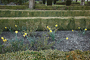 USA, Oregon, Salem, State Capitol State Park, daffodils in a garden in the park.