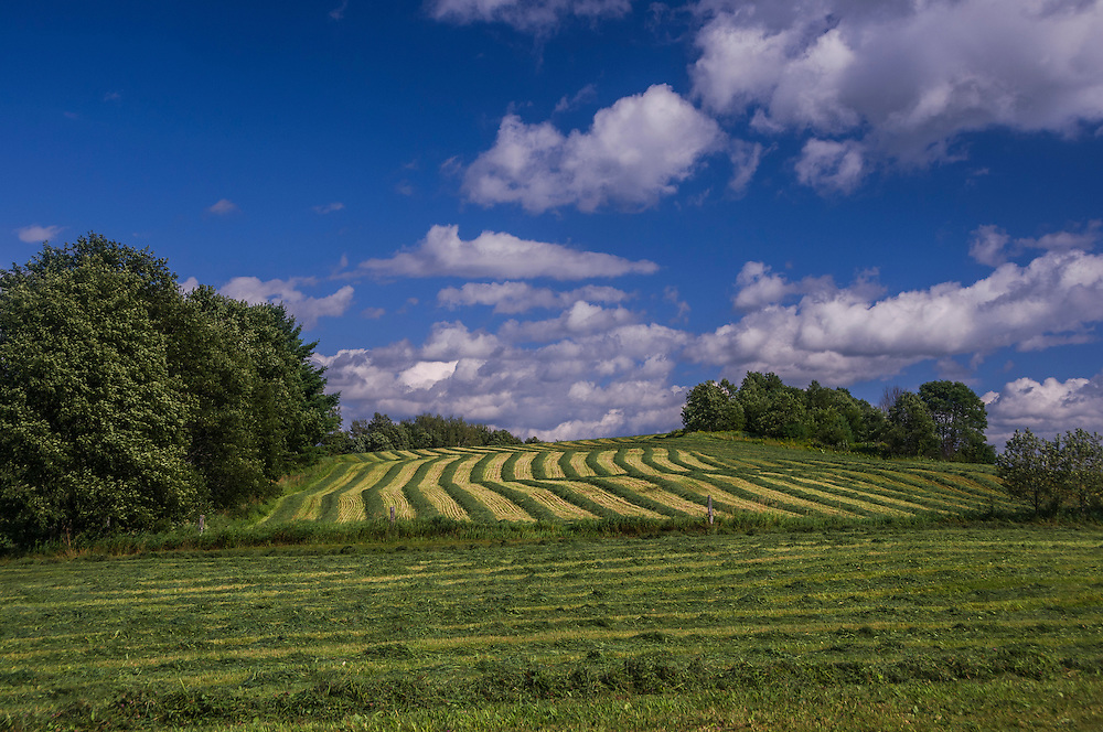 Windrows of fresh cut hay on a summer hillside, Danville, VT