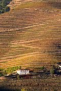 vineyards calem douro portugal