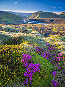 Moss and scenery in the Southern Region of Iceland