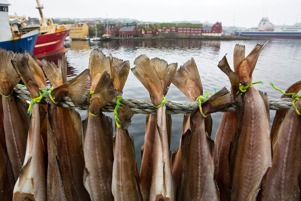 Torshavn, Streymoy, Faroe Islands.<br /> <br /> The Faroe islands economy is a marine based one. A fishing trawler, just back from ten days at sea, dried cod on it's lines.  Torshavn, Harbor.
