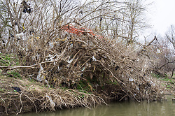 Plastic bags and trash stuck on branches on bank of the Trinity River, Great Trinity Forest, Dallas, Texas, USA