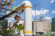 Lily Foster, an American who co-founded the local urban gardening organization Sembradores Urbanos, works on the hydroponics installation on the roof of her home in Mexico City, Mexico on June 19, 2008.
