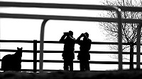 Photo: Alan Crowhurst.<br />Pat Eddery Racing Stables. 01/03/2006. Watching the gallops.