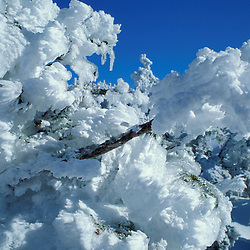 Rime ice coats the spruce with Mt. Washington in the distance. Presidential Range. White Mountains.
