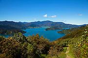 Queen Charlotte Track, Marlborough Sounds, South Island, New Zealand