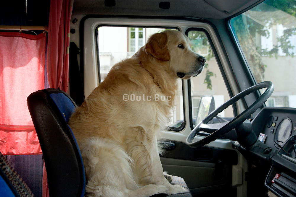 Dog sitting in the drivers seat of a large van