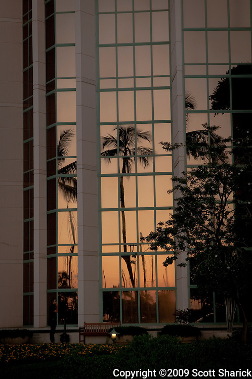 Palm trees reflecting in the Hawaii Prince hotel at sunset.