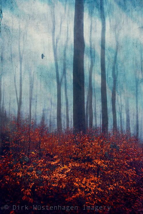 Forest on a late autumn day - red foliage and abstract trees in mist