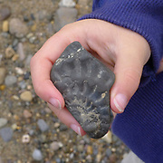 A young boy holds a fossil he has found on the beach, Robin Hood's Bay, North Yorkshire, UK