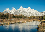 Sunrise spotlights the Tetons which reflect in the Snake River at Schwabacher Landing (16 miles north of Jackson Hole on US26/89/191) in Grand Teton National Park, Wyoming, USA. Swimming mallard ducks.