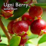 Ugni molinae Berry Pictures  Food Photography, Photos & Images