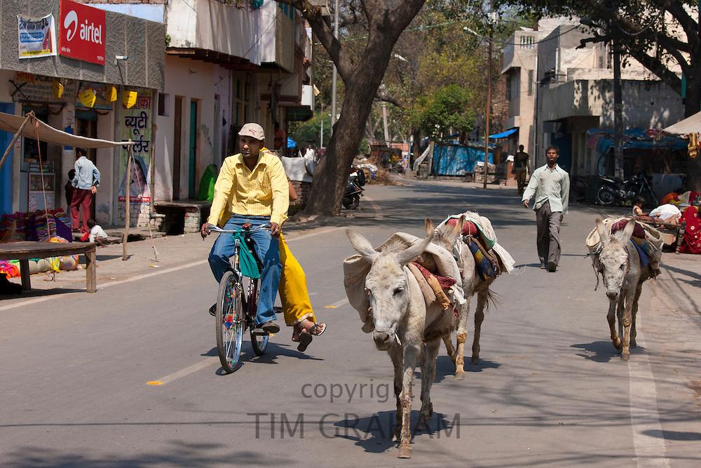Street scene with donkeys in Agra, India