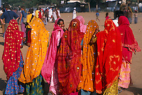 Rajasthani women in colorful saris walking, Pushkar Fair (camel fair), Pushkar, Rajasthan, India
