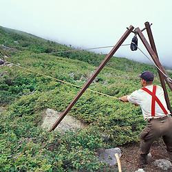 Trail Crew. Alpine Vegetation. Moving boulders over fragile vegtation on New Hampshire's Mt. Washington.  Lion's Head, Mt. Washington, NH