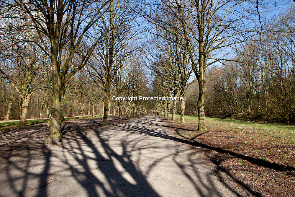 Amsterdam forest in spring