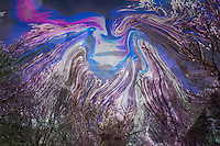 enchanted forest with fluid trees shapes moving around moon in violet colors with shades.