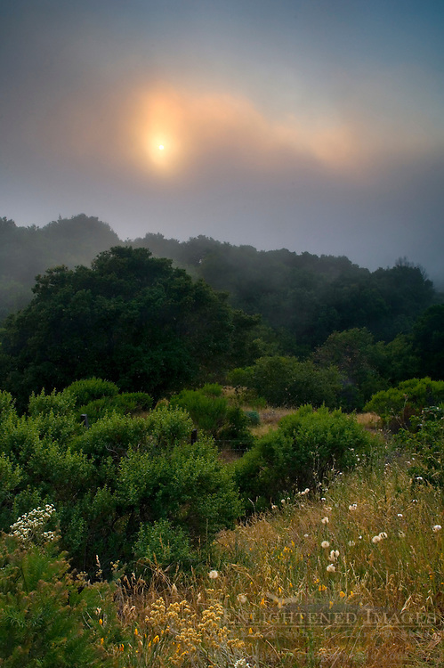 Sunset through coastal fog in hills along the old coast road, Big Sur Coast, Monterey County, California