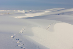 Footprints on sand dunes at White Sands National Monument, New Mexico, USA.