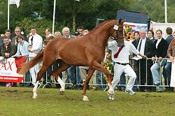 355-Violita<br /> KWPN Paardendagen 2005<br /> Photo © Hippo Foto