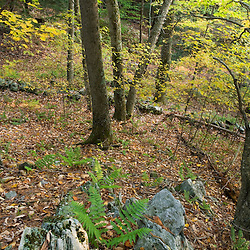A hardwood forest in West Fairlee, Vermont.  Brushwood Community Forest project.