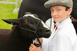 © Licensed to London News Pictures. 22/07/2019. Llanelwedd, Powys, UK. Sheep judging takes place on the first day of the 100th Royal Welsh Agricultural Show. The Royal Welsh Agricultural Show is hailed as the largest & most prestigious event of its kind in Europe. In excess of 200,000 visitors are usually expected for the annual four day show period. The Royal Welsh Agricultural Society was founded in 1904. Photo credit: Graham M. Lawrence/LNP