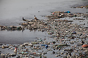 Birds are standing in the heavily polluted and semi-dry Yamuna River next to the Taj Mahal, in Agra.