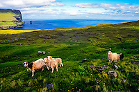 Faroe Islands. Risin og Kellingin (the Giant and the Witch) sea stacks.