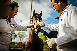 Inspeção sanitária para verificar a presença da praga de mormo em cavalos na chegada dos animais no 38ª edição da Expointer, a maior feira agrícola da América Latina em Esteio, Brasil, em 24 de agosto de 2015. FOTO: Jefferson Bernardes/ Agência Preview