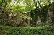 rock canyon of the Stenzelberg mountain in the Siebengebirge hill range near Koenigswinter, the mountain served as a quarry for quartz latite until the 1930s, North Rhine-Westphalia, Germany.<br /> <br /> Felsschlucht des Stenzelberg im Siebengebirge bei Koenigswinter, der Berg diente bis in die 1930er Jahre als Steinbruch fuer Quarz-Latit, Nordrhein-Westfalen, Deutschland.