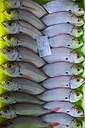 Fresh fish at Confradia de Pescadores de Luarca, Confederation of Luarca Fishermen, at Puerto Luarca in Asturias, Spain