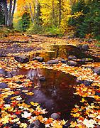 Maple, oak and birch leaves floating in the shallow water of Medora Creek, Mac Frimodig Park, Keweenaw Peninsula southwest of Copper Harbor, Upper Peninsula of Michigan.