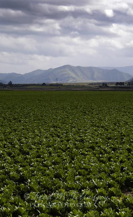 Salinas Valley ~ Santa Lucia Mountains