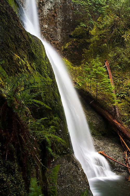 Low angle view of Marymere Falls, a 90-foot waterfall near Crescent Lake, in Olympic National Park, WA, is accessible by a one-mile trail that weaves through mossy old growth forest.
