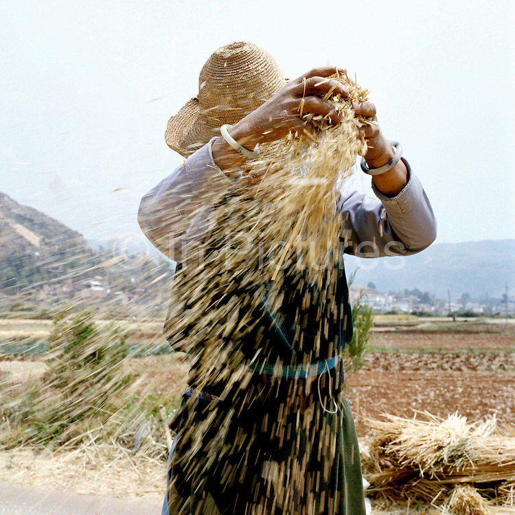 Wearing a traditional jade bracelet and a straw hat, a Bai ethnic minority woman winnows wheat by dropping the grains from a height allowing the chaff to blow away, Da Cheng village, Yunnan province, China