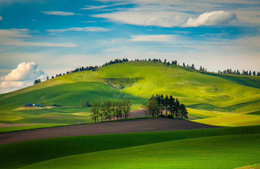 The Palouse is a region of the northwestern United States, encompassing parts of southeastern Washington, north central Idaho and, in some definitions, extending south into northeast Oregon. It is a major agricultural area, primarily producing wheat and legumes.