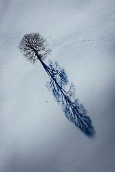 THEMENBILD - ein Baum auf einem schneebedeckten Feld wirft seinen Schatten auf die Landschaft, aufgenommen am 16. Januar 2019 in Kaprun, Oesterreich // a Trees on a snowy field cast his shadow on the landscape in Kaprun, Austria on 2019/01/15. EXPA Pictures © 2019, PhotoCredit: EXPA/ JFK