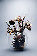 dried up dead sunflowers in a round vase with grey background