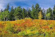 edge of forest in autumn color<br /> near Prince Albert<br /> Saskatchewan<br /> Canada