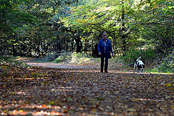 © Licensed to London News Pictures. 23/10/2013. Burnham, UK Afternoon sunshine through the autumnal trees at Burnham Beeches, South Buckinghamshire on Wednesday 23rd October 2010. The Beeches, covering 220 hectares, is primarily noted for its ancient beech and oak pollards and the range of flora and fauna associated with old trees and decaying wood.. Photo credit : Stephen Simpson/LNP